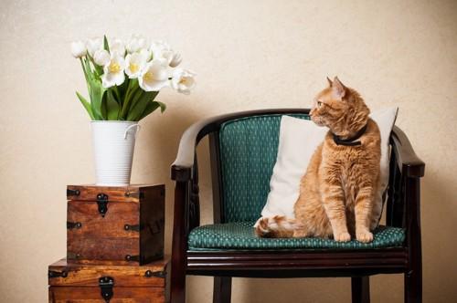花を見る猫