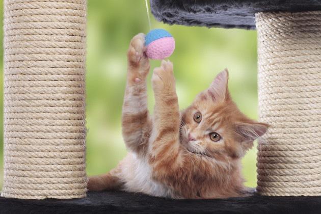 アスレチックで遊んでいる猫