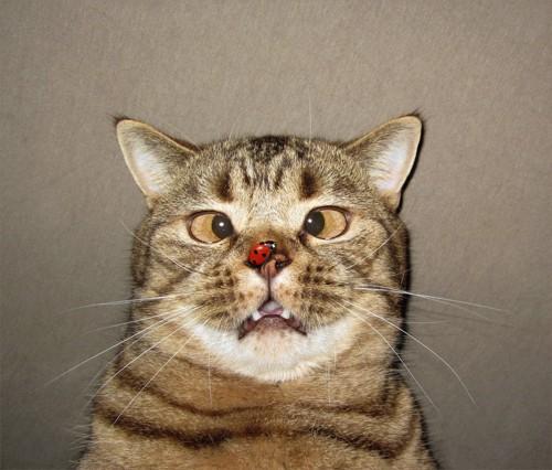 テントウムシと変な顔の猫