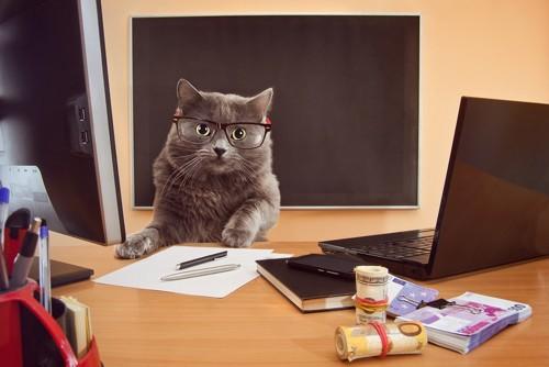 会社で働く猫