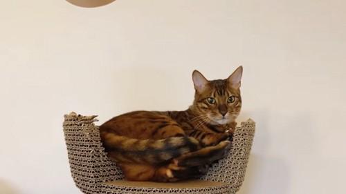 爪とぎタワーの上に座る猫