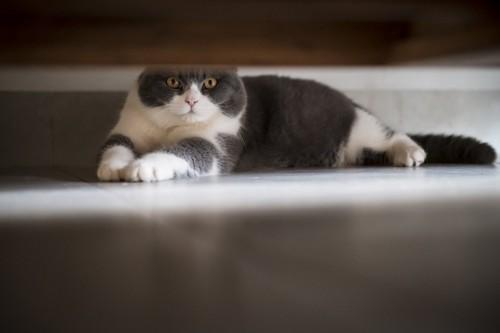 タンスの下の猫