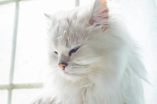 窓辺でうとうとしている猫