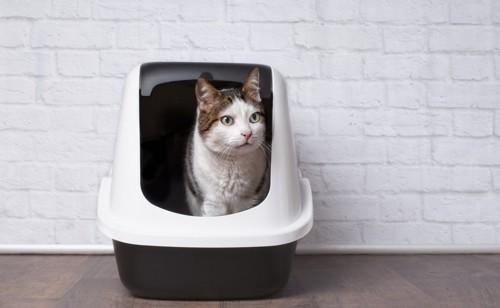 トイレにはいる猫