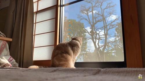 外を見るココちゃん