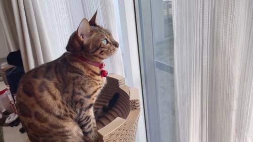 おすわりをする猫