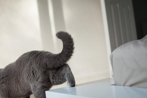去り行く猫の尻