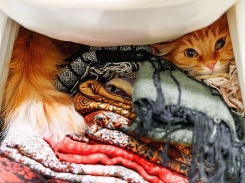クローゼットの中に隠れる猫