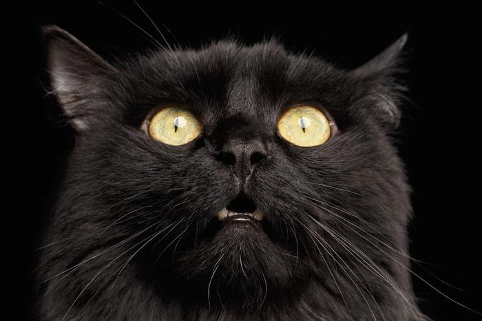 驚いた顔の黒猫