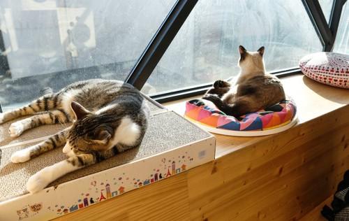 窓辺でくつろぐ2匹の猫