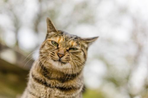 茶虎の不機嫌な猫