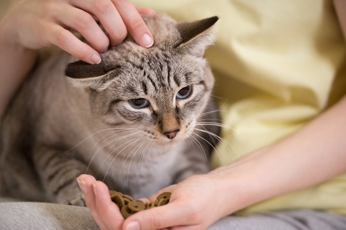 手からフードをもらっても食べたくなさそうな猫