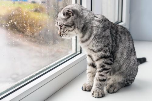 雨が降る外を窓辺に座って見る猫