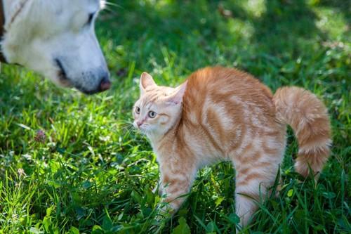 犬に威嚇する猫