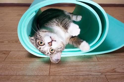 マットの中に入る猫