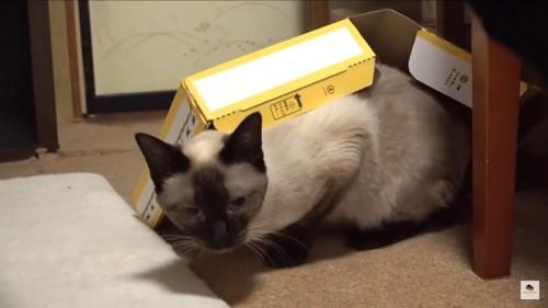 仕方ないから箱をかぶる