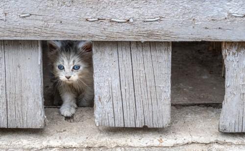 狭い出口を抜け出そうとする子猫