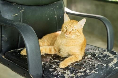ボロボロの椅子の上で休む猫