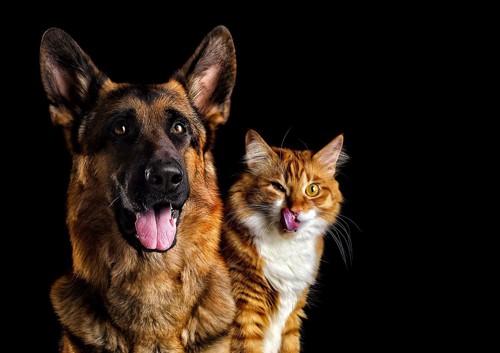 舌を出す犬と猫