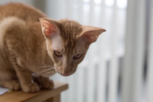 台に乗っている猫