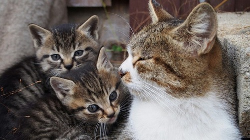 子猫と大きい猫
