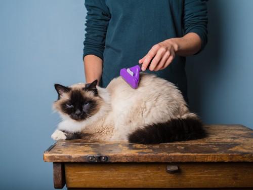 ブラシをかけてもらう猫