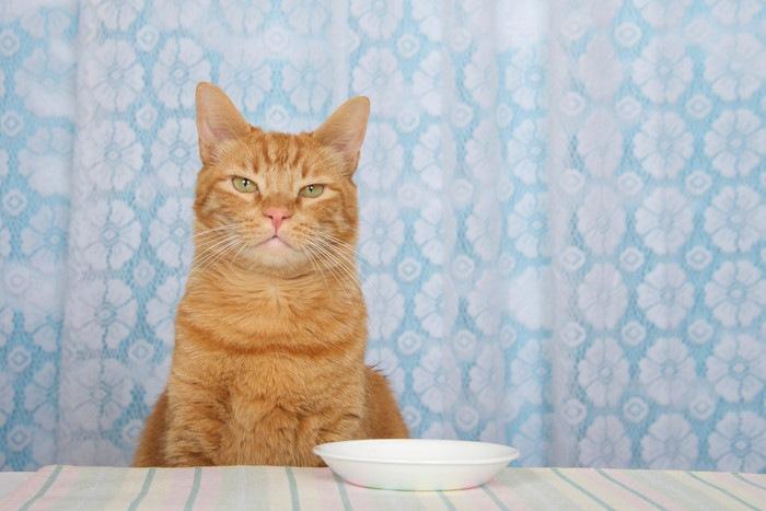 お座りしている茶色の猫と白い皿
