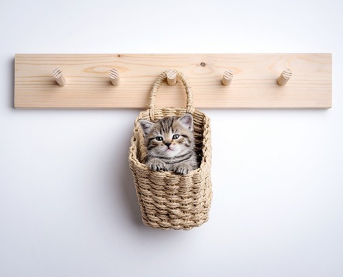 壁にかかっている猫