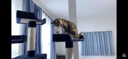 おもちゃのにおいを嗅ぐ猫