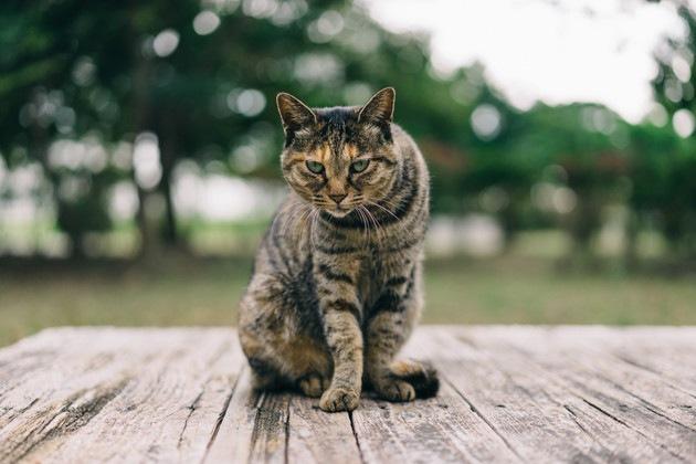 じっとみている猫