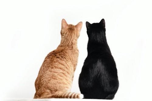並んで座る二匹の猫の後ろ姿
