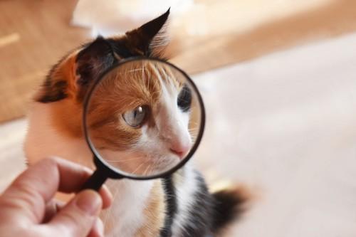 虫眼鏡と猫