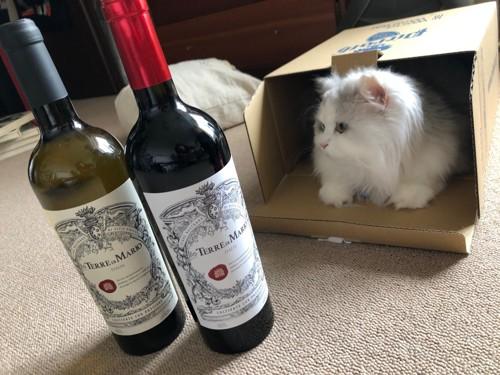 ワイン二本を前に箱に入るマミ