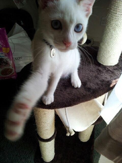 猫パンチをする小太郎