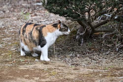 木を見つめる猫