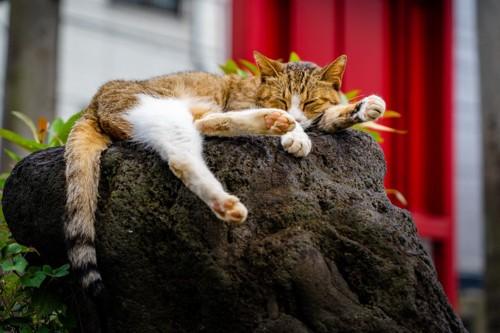石の上で眠る猫