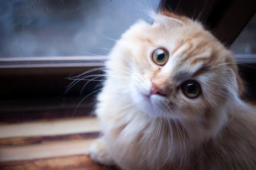 寂しげにこちらを見上げる猫