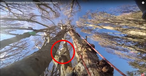 木の上に猫を確認
