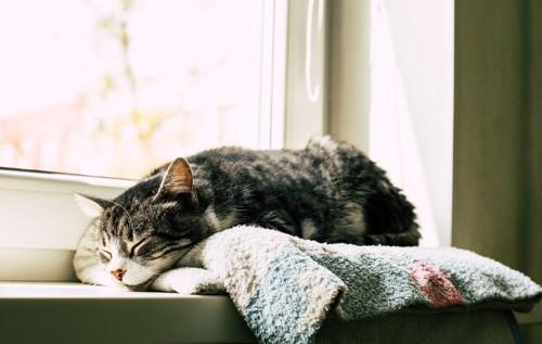 ぐっすりな猫