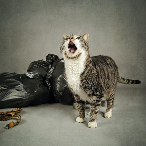 ゴミ袋の横で鳴いている猫