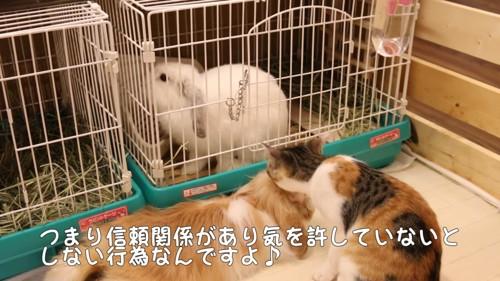 毛づくろい中の猫とウサギの後ろ姿
