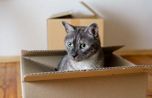 箱の中から顔を出す猫