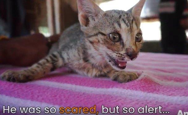 怯えている子猫