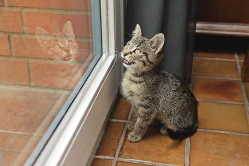 窓の外に向かって鳴く猫