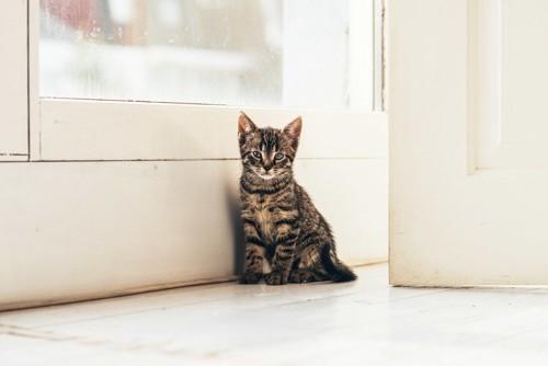 ドアの前の子猫