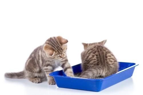 トイレにいる二匹の猫