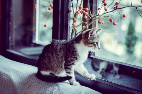 窓から外を眺めている猫