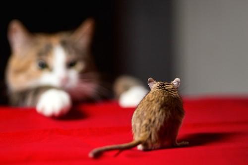 猫に追われるネズミ