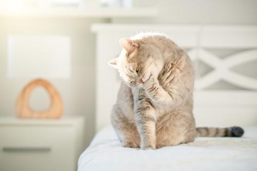 足をかむ猫