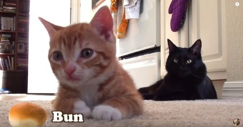 2匹の子猫とパンの絵